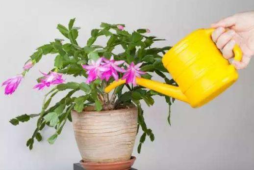 养花离不开浇水?这3种花浇得越勤,枯萎的越快,你家应该也养过