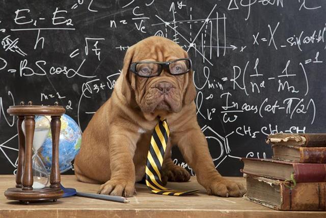 能不能让狗狗变聪明?还真有办法,而且人人都能做到