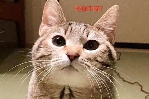 回家看到一地毛线,两只猫咪用表情在说话,铲屎的你会明白的呵