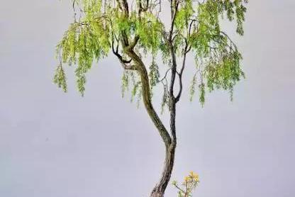 爱木盆景 I 画境•诗境•禅境——文人树盆景系列讲座(二)