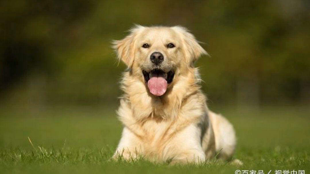 每日一笑:哥们打架干不过他老婆,最后还是他的狗救他一命