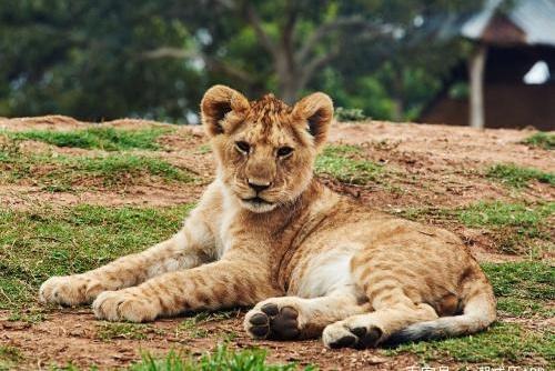 心理测试:选一组动物,测测你最想要的是什么!