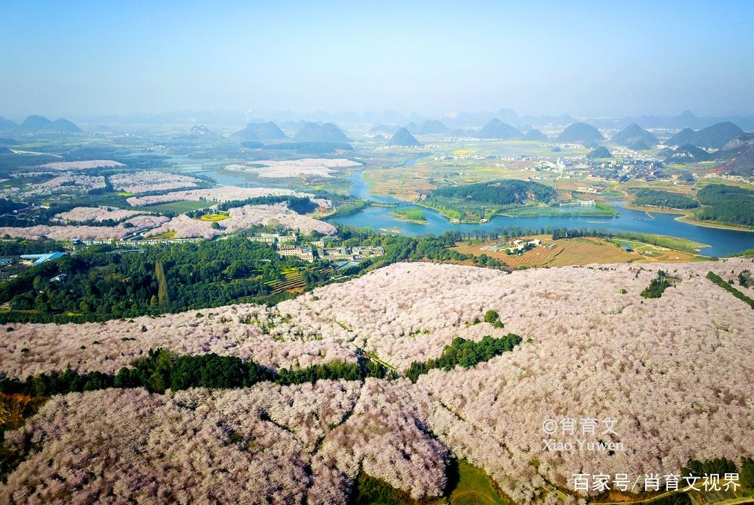 贵州的万亩樱花竞相绽放,被外媒评为蓝色星球里,最美的樱花园