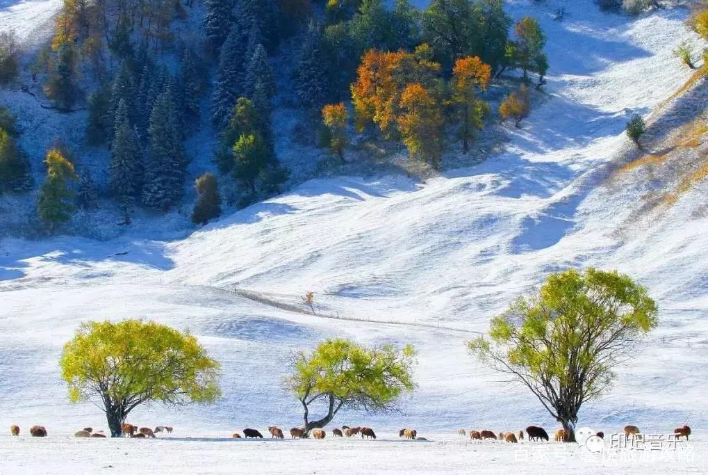 那拉提草原的雪美得如此超然