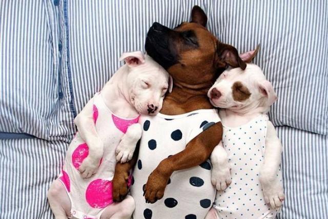 """狗狗最重视的5样东西,你若""""给足""""狗狗,它会一辈子守护你!"""