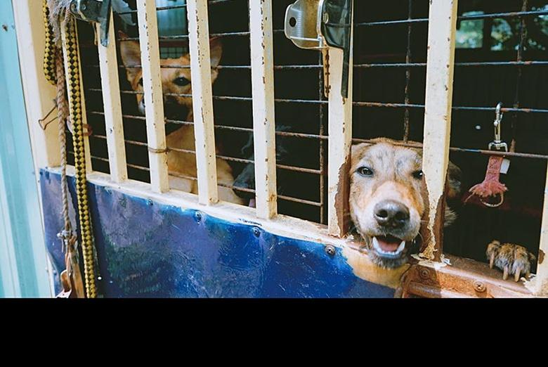 最可怜的不是流浪狗,也不是狗肉店的狗,而是你家的宠物狗
