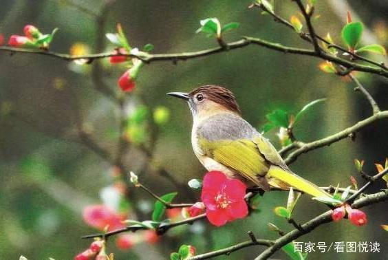 海棠枝上,鸟儿在春光里浪漫着诗行