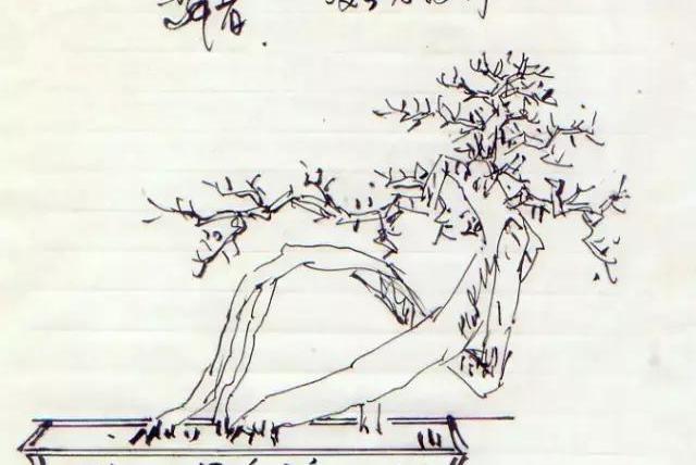 爱木盆景I 曾宪烨桩材设计案例,一个桩材两种设计