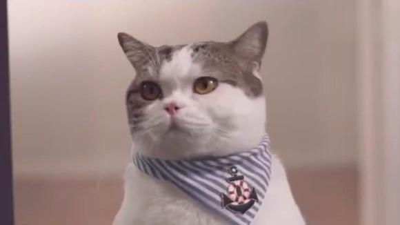 03:48 超级好玩,给小猫咪洗澡,穿衣服,高情商萌宠游戏 02:04 可爱的猫