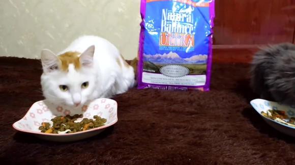 02:36 可爱小猫咪必须要给它们吃好的,一天五十元对付可以吧 01:45