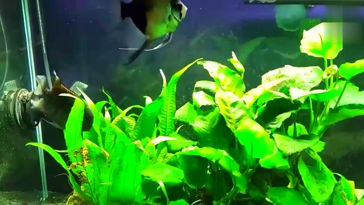鱼缸造景-漂亮的鱼缸景观,可爱的慈鲷-hao123上网导航
