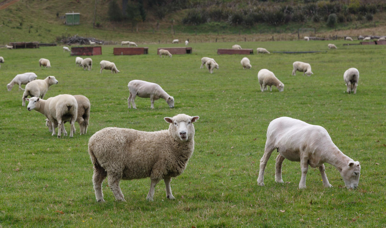 属羊女的和什么属相最配 属羊女跟哪个属相最配