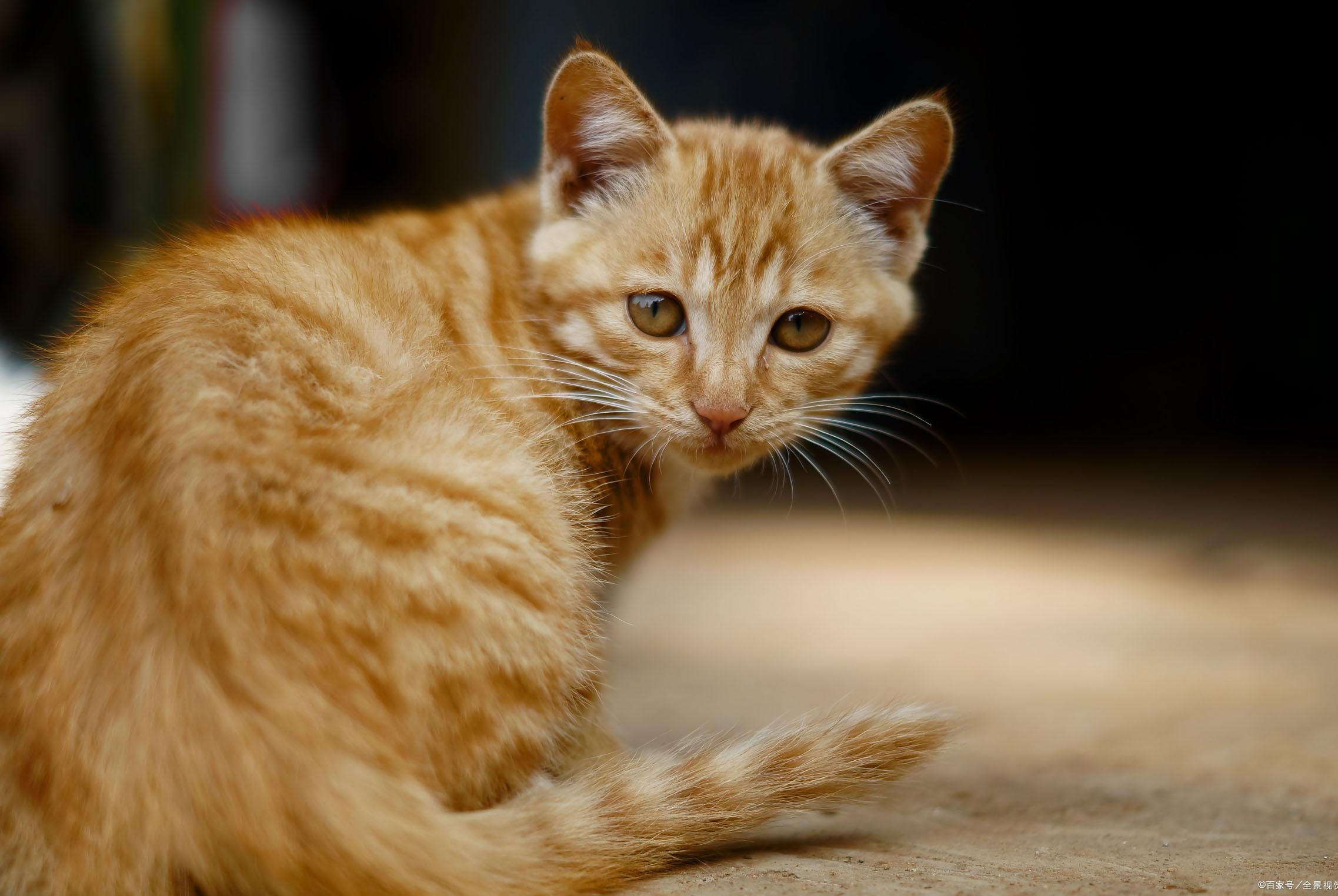 新手养猫必看!猫咪都需要哪些营养成分,这篇文章告诉你