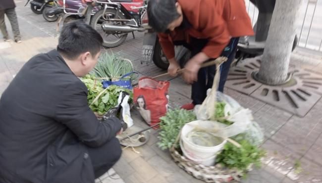 大妈警局前卖罂粟苗被抓:我真的不知道种这个东西犯法