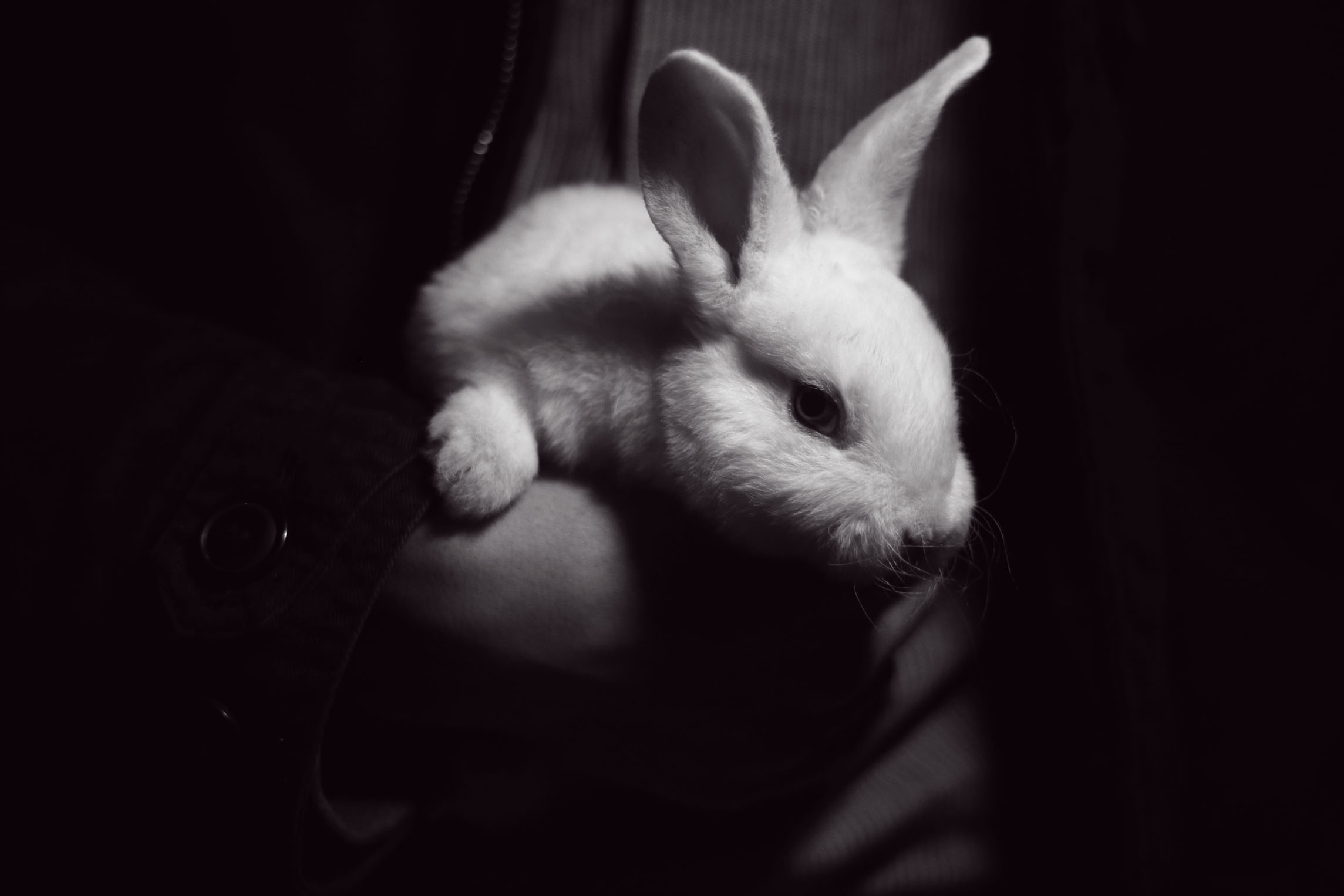 女属兔与什么属相最佳 属兔的2020年财运预测