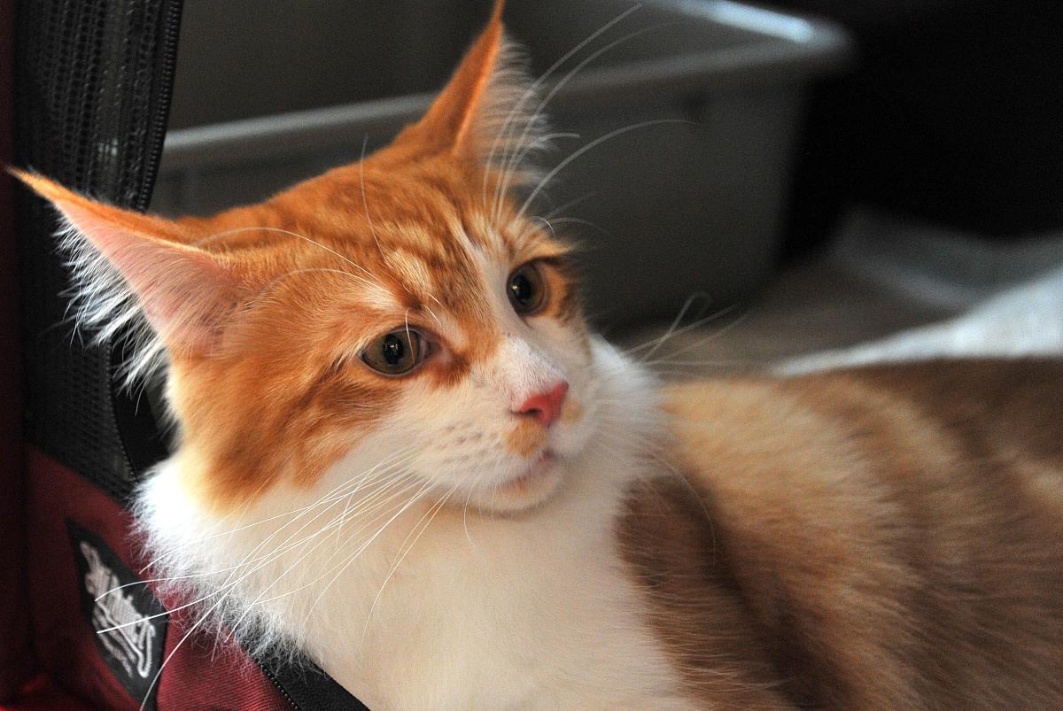 养猫家庭需要注意的安全防范,不要粗心大意!这些点你需要知道