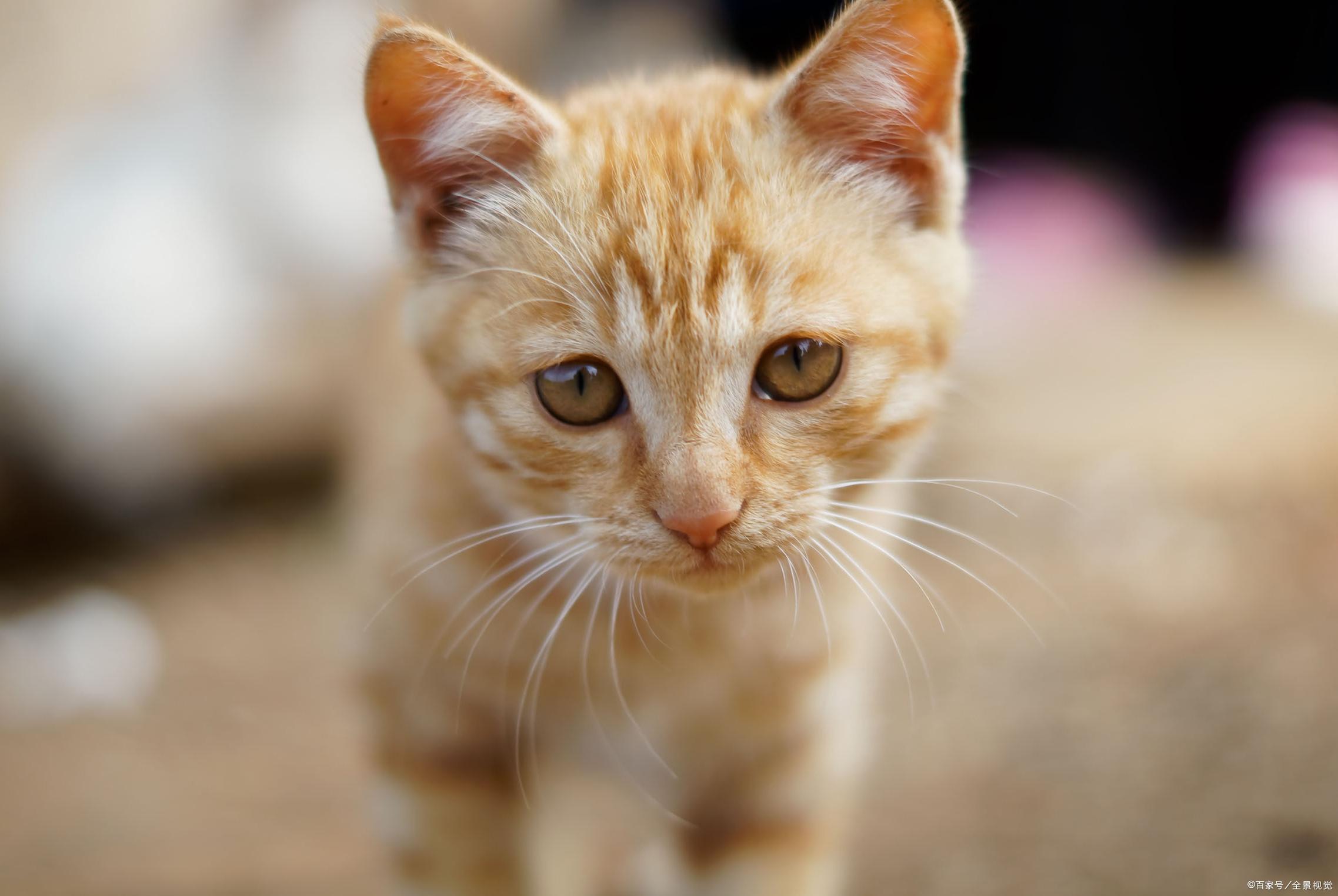 你会和你的猫一起睡吗?备受争议总结出几点问题,欢迎阅读