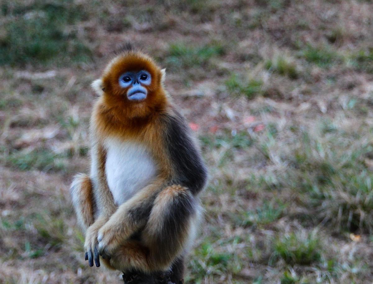 属猴的和什么属相最配属猴的和什么属相最配婚