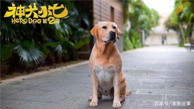 电视剧《神犬小七第二季》观感