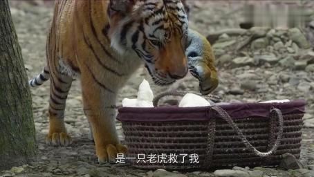 婴儿是个怪胎 老爷将他埋在树林 不料老虎都被吓跑了