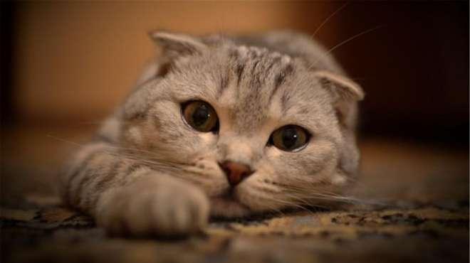 如果你的猫咪一直养不胖,可能是这些原因!