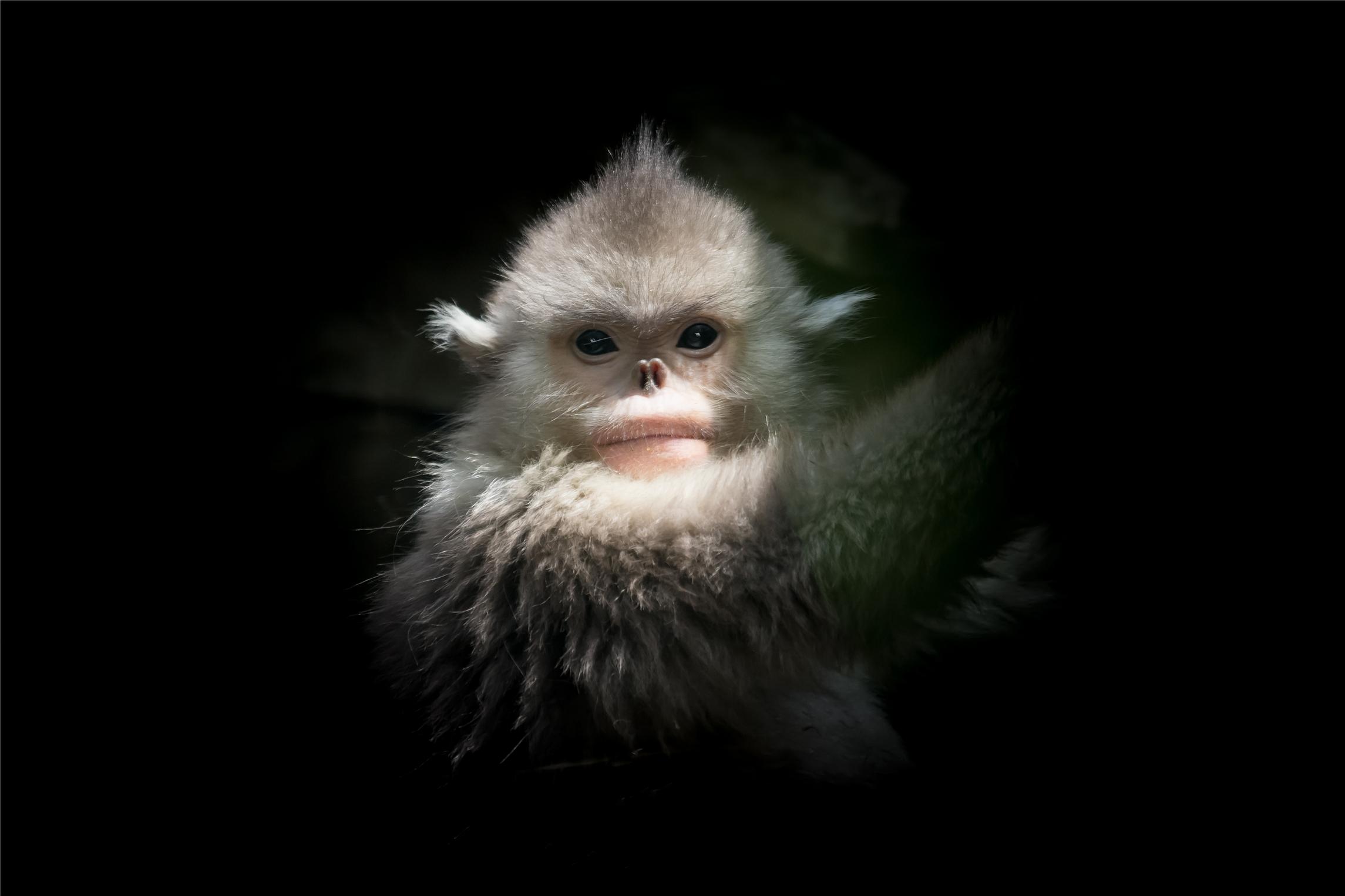 属猴今年的感情怎么样 属猴今年的幸运色是什么颜色