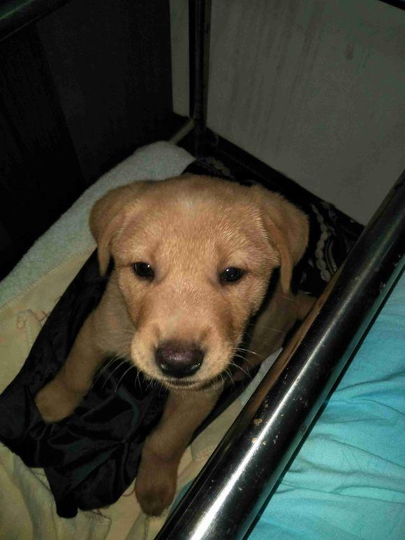 下班在工厂遇到一只流浪狗,网友看它很可怜就带回家了
