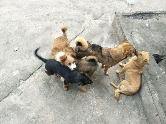 流浪狗越来越多,都已经快养不起了,它们根本不担心自己没人管