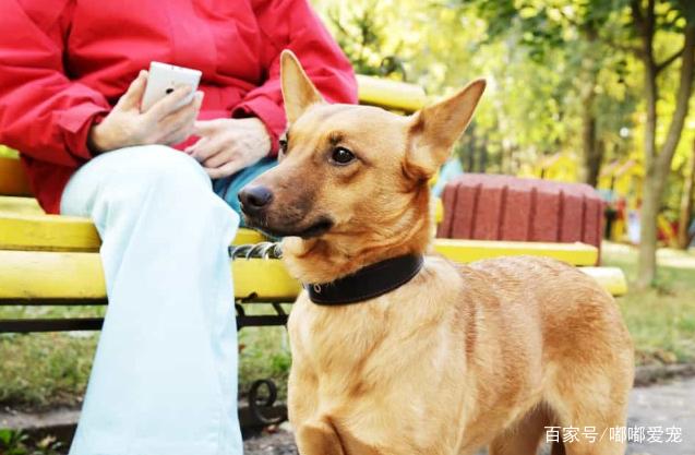 狗可以吃西葫芦吗?西葫芦可以用各种形式烹饪