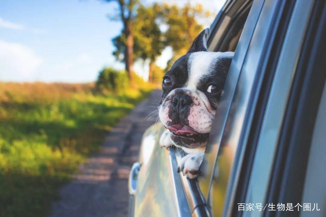 狗狗研究所| Exm?狗狗竟然比人类理性?
