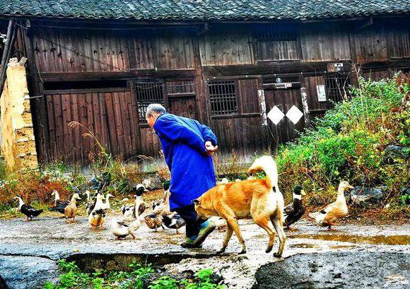 土狗和老人一起生活,不能缺了它们的存在