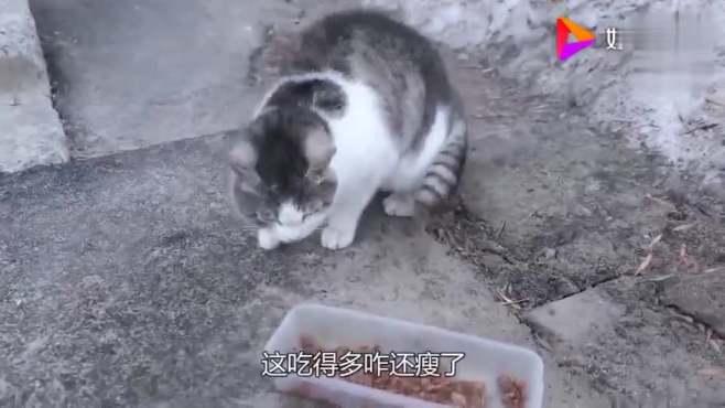 每天猫粮吃个精光,猫咪却越来越瘦,主人装上监控才知道真相!