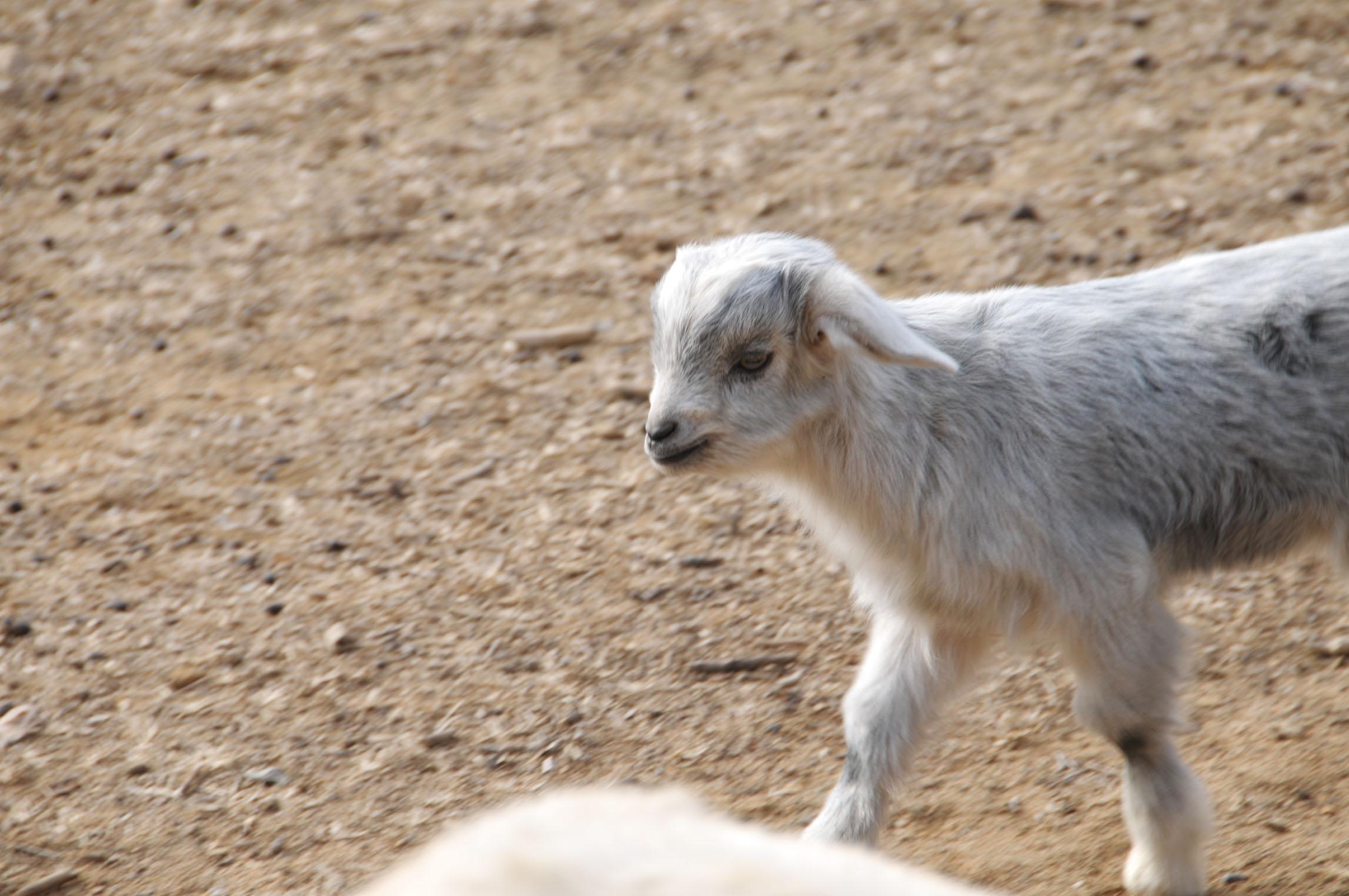 属羊的和什么属相最配属羊的和什么属相最配79年的羊