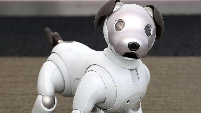 中国农村小伙发明机器狗,远越国外专家,网友疯狂点赞:长脸了!
