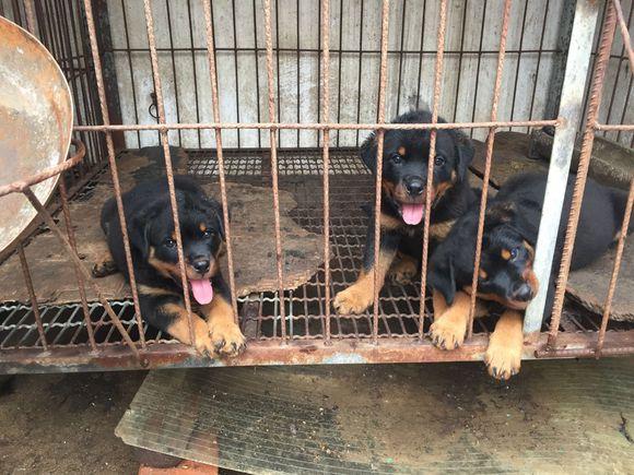 小狗们一只一只地离开,最后家里就剩它自己了,明年还能生