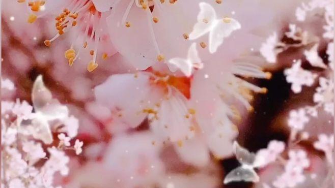 春暖花开,你看了吗?