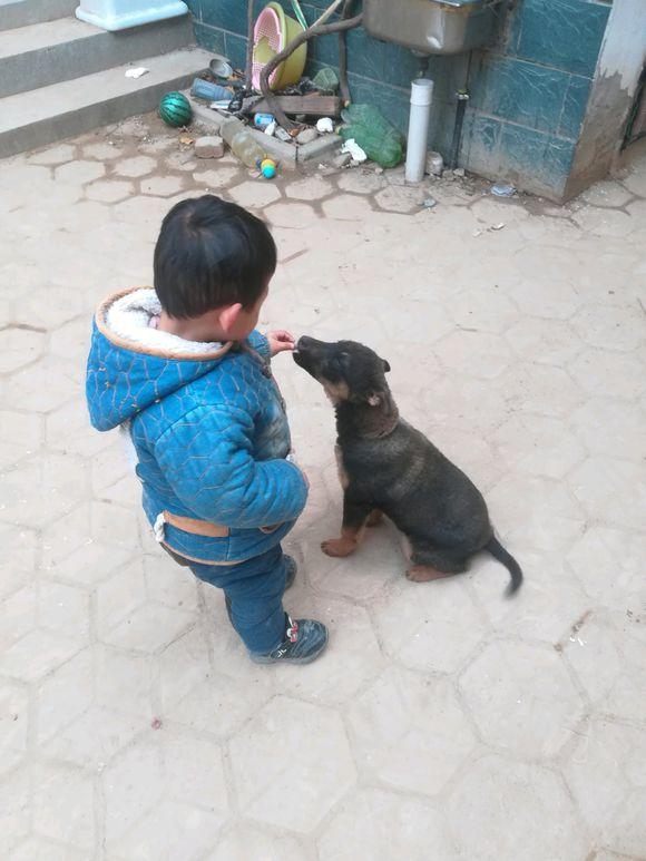 儿子:给你个吃的,你驮着我!土狗:成交!