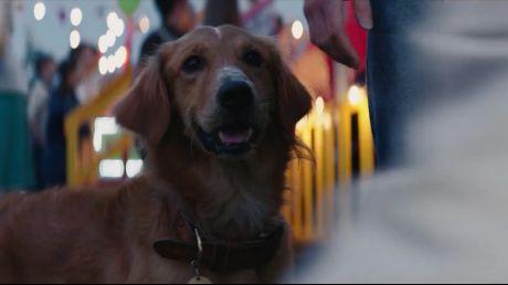 人和动物的感情能有多深,这部电影中或许能找到答案