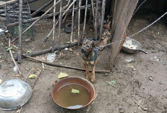 土狗生活条件不好,看门却非常负责,从来都不会偷懒