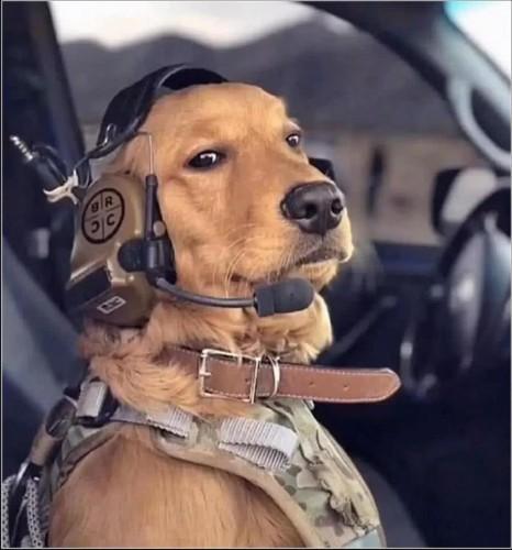 如今狗狗装备都这么全,通讯设备很高端,再也不担心跑丢
