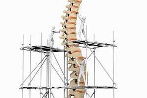 第二条生命线-脊柱