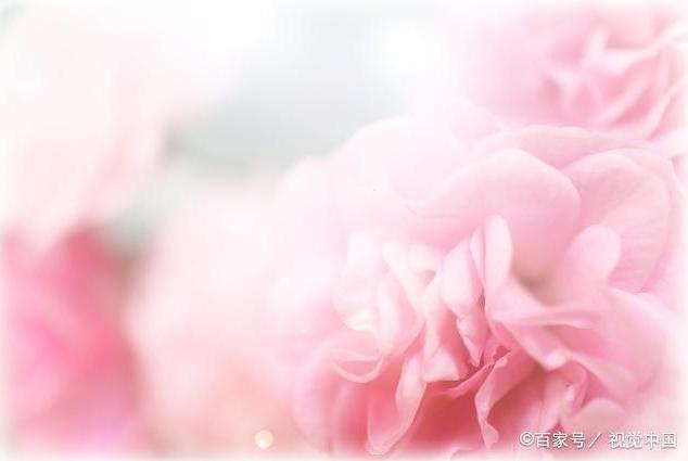 四月桃花终盛开,这些星座桃花遍地,红鸾星照,表白成功率超高