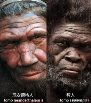 尼安德特人为何会灭绝?科学家剖析原因,尼安德特人灭绝是必然的