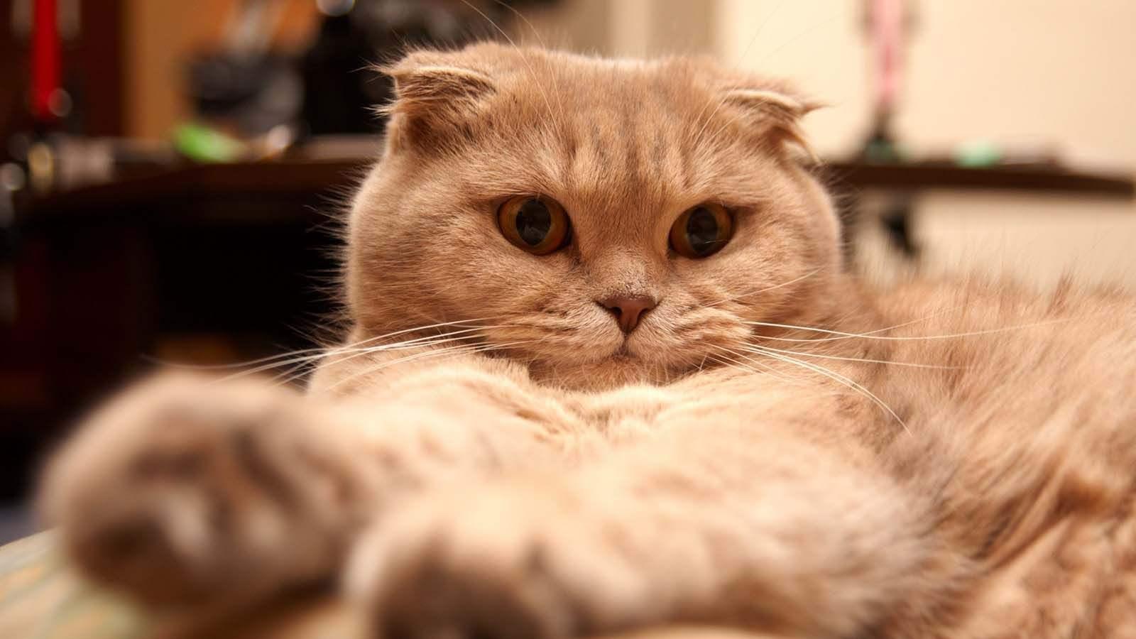 落樱缤纷日,驱虫正当时,史上最全的猫咪驱虫知识大全
