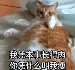双十一都大量囤猫粮,大家都是怎么保存猫粮的?