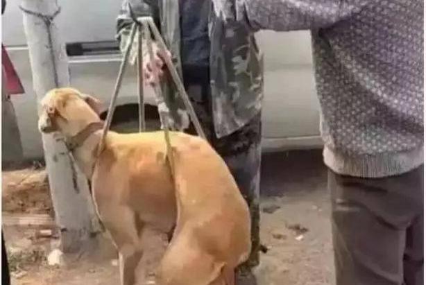 男人卖掉了自己养了十年的衷犬,狗狗的行为,感动了狗贩子
