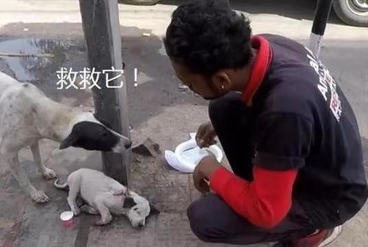 流浪幼犬遭汽车撞伤,妈妈求好心人帮忙,最后平安获救