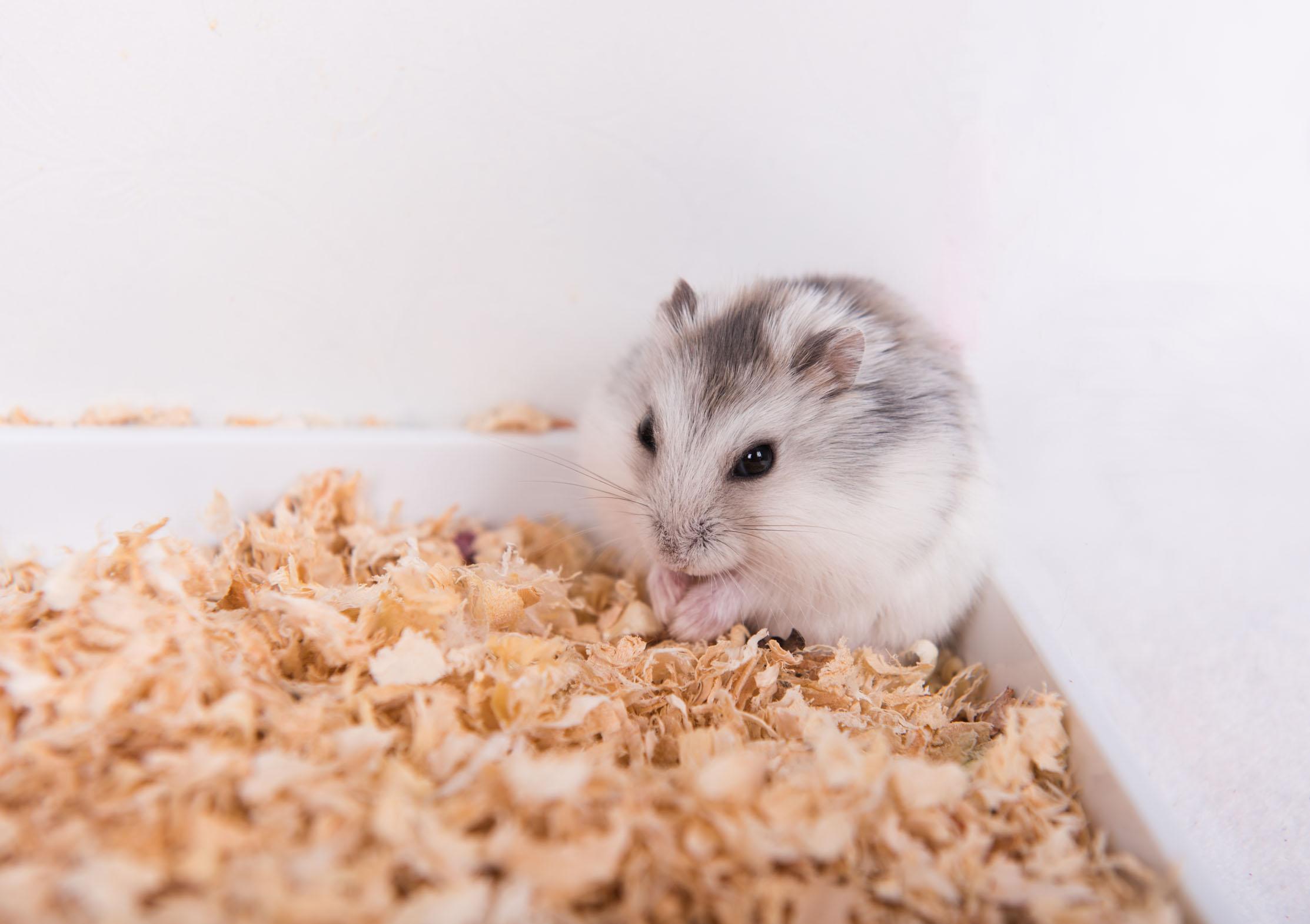 十鼠九苦哪个月份最苦鼠年几月份命最苦