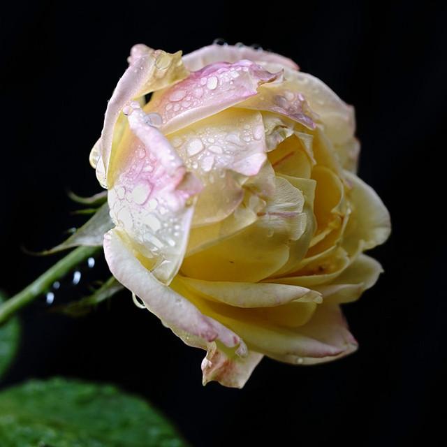 小薇的植物秘密