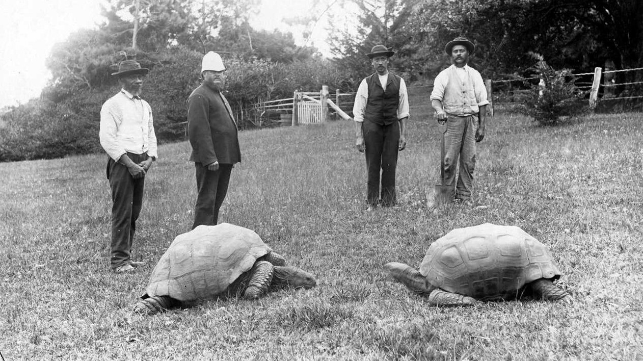 铁打的乌龟流水的总督,从维多利亚时代走来的英国神龟